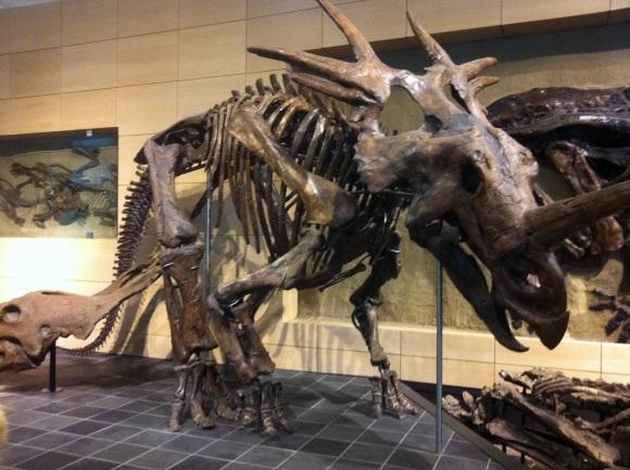 dinosaurs_ottawa_museum