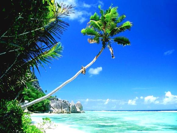 2230-palmier-sur-la-plage-WallFizz
