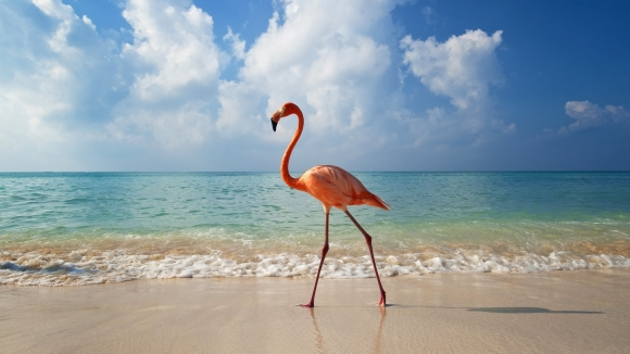 flamingo-walking-along-beach-bayahibe
