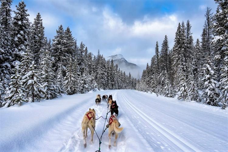 dogsledding-banff-national-park-alberta-x2