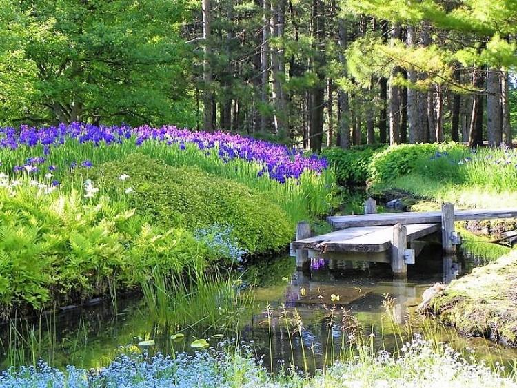 montreal-botanical-garden-iris.jpg